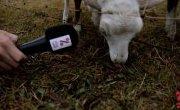 Agriculture/élevage : redonner la parole aux concernés